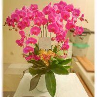 toko rangkaian bunga medan, Toko Karangan Bunga di Medan – Jual Rangkaian Bunga