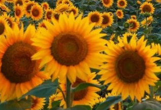 Toko Bunga Online, Perawatan Kulit Berbahan Dasar Bunga