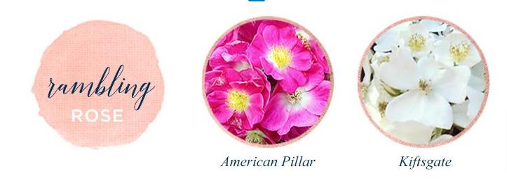 Toko Bunga Online Jenis Mawar Yang Wajib Kamu Ketahui, Jenis Mawar Yang Wajib Kamu Ketahui